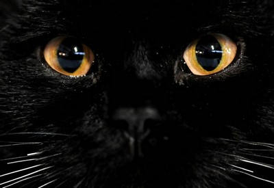 Why you shouldn't look into the cat's eyes: the mystic and the answer