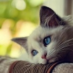 The treatment of gastritis in cats